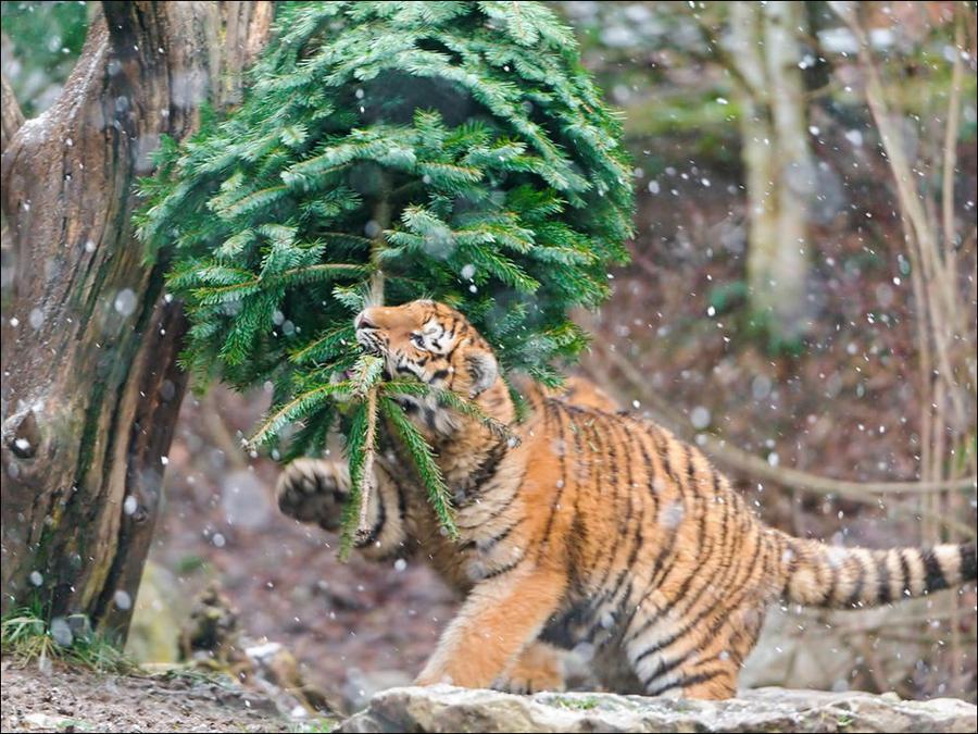 cat37 А вы поставили елку для кота?