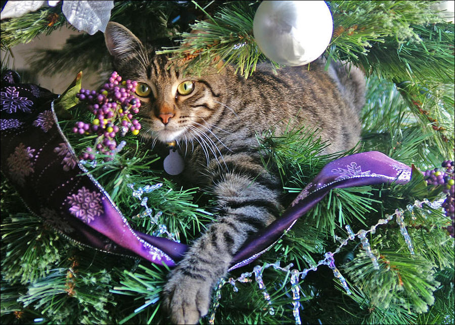 cat4 А вы поставили елку для кота?