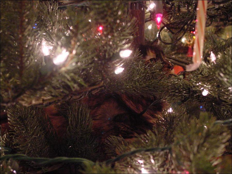 cat5 А вы поставили елку для кота?