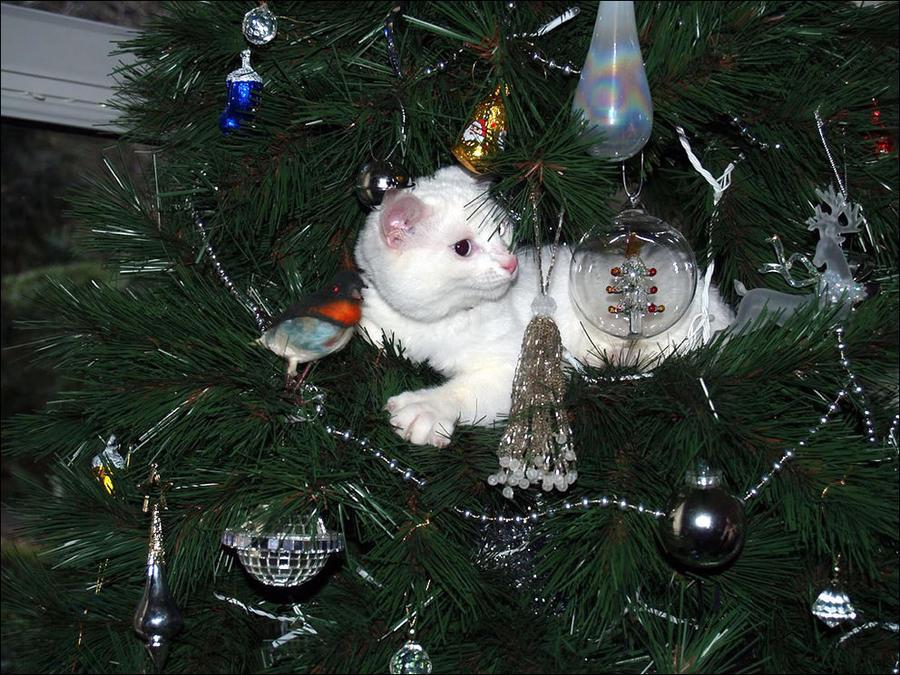 cat6 А вы поставили елку для кота?
