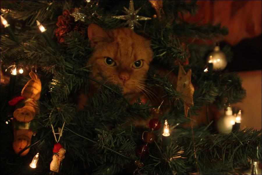 cat7 А вы поставили елку для кота?