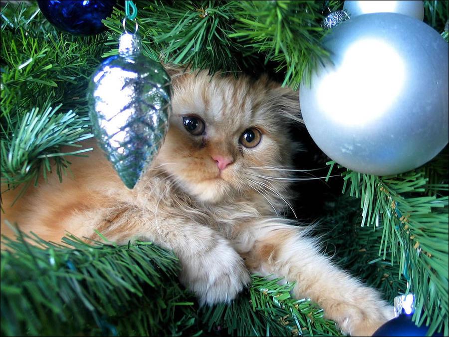 cat8 А вы поставили елку для кота?
