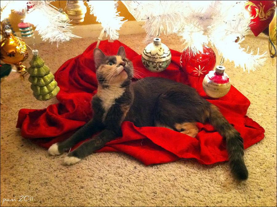 cat9 А вы поставили елку для кота?
