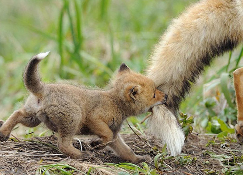 detenishi 21 Детеныши животных в фотографиях