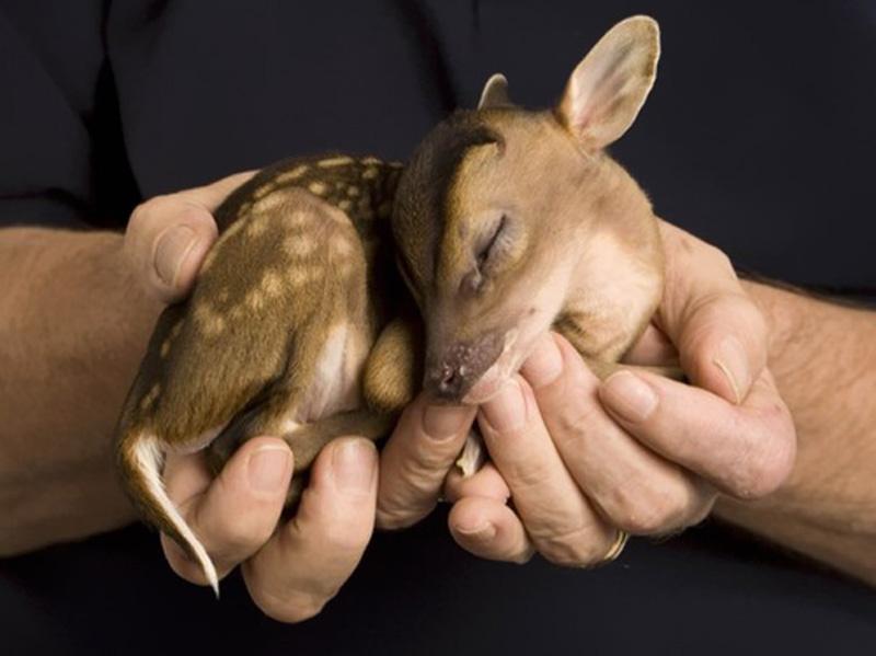 detenishi 6 Детеныши животных в фотографиях