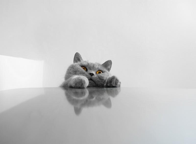 kotejki03 16 лучших котов сезона