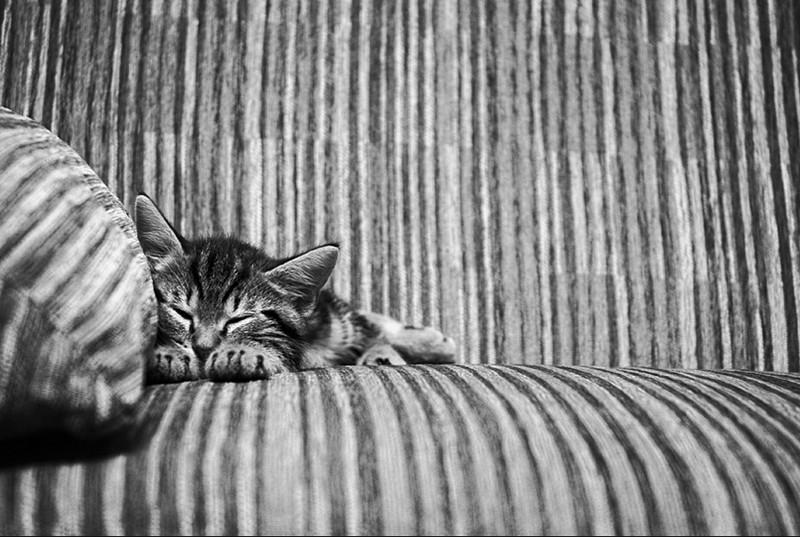 kotejki11 16 лучших котов сезона