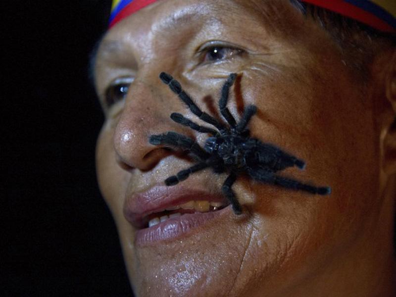 mirovierekordi 14 15 необычных мировых рекордов уходящего 2012 года