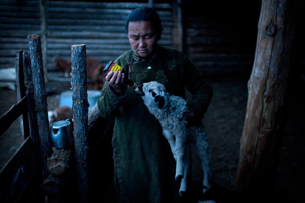 nomade06 Vanishing Cultures Project: Монгольские кочевники