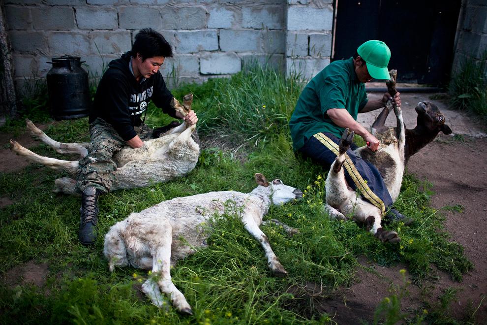 nomade07 Vanishing Cultures Project: Монгольские кочевники
