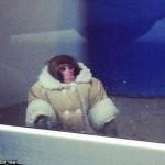 История обезьянки из IKEA