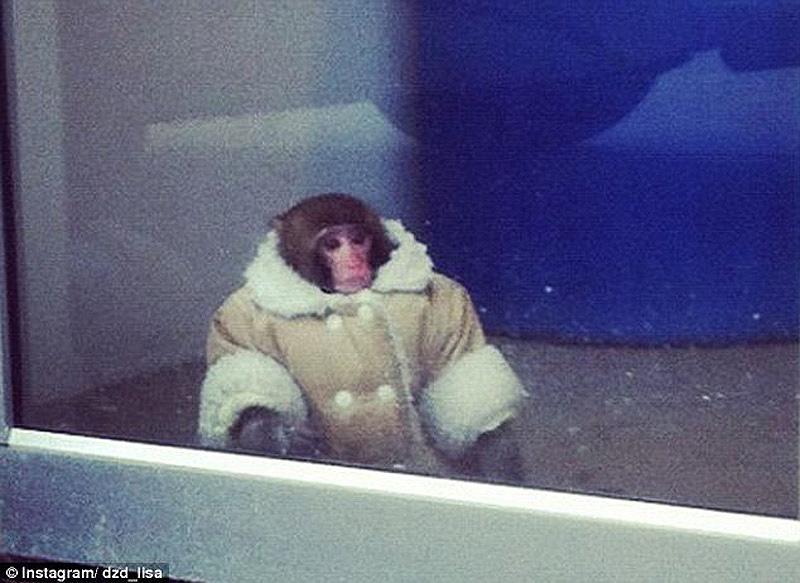 obezyankadarvin 1 История обезьянки из IKEA