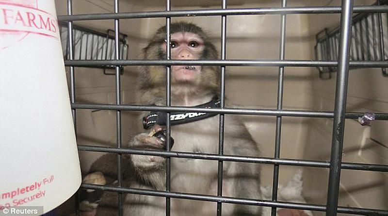 obezyankadarvin 11 История обезьянки из IKEA