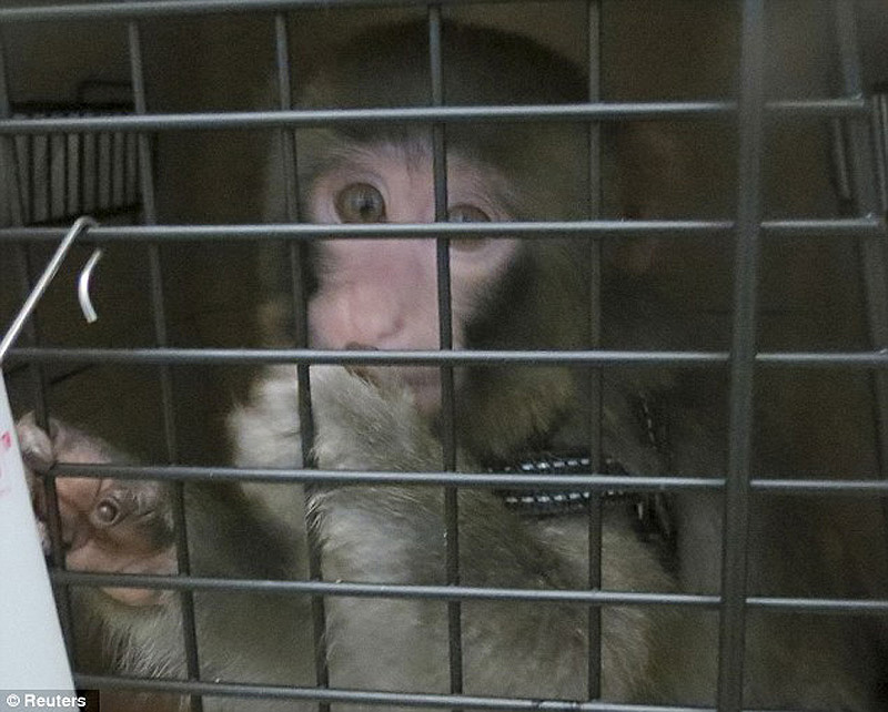 obezyankadarvin 12 История обезьянки из IKEA