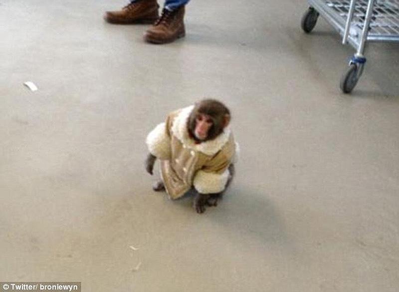 obezyankadarvin 2 История обезьянки из IKEA