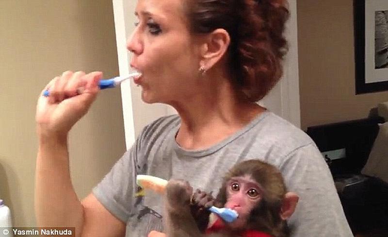 obezyankadarvin 3 История обезьянки из IKEA
