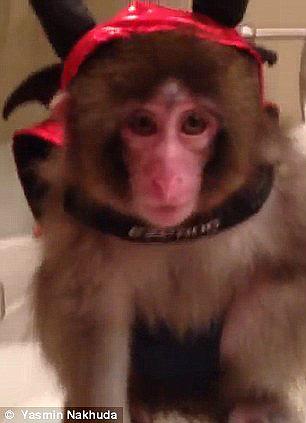 obezyankadarvin 5 История обезьянки из IKEA