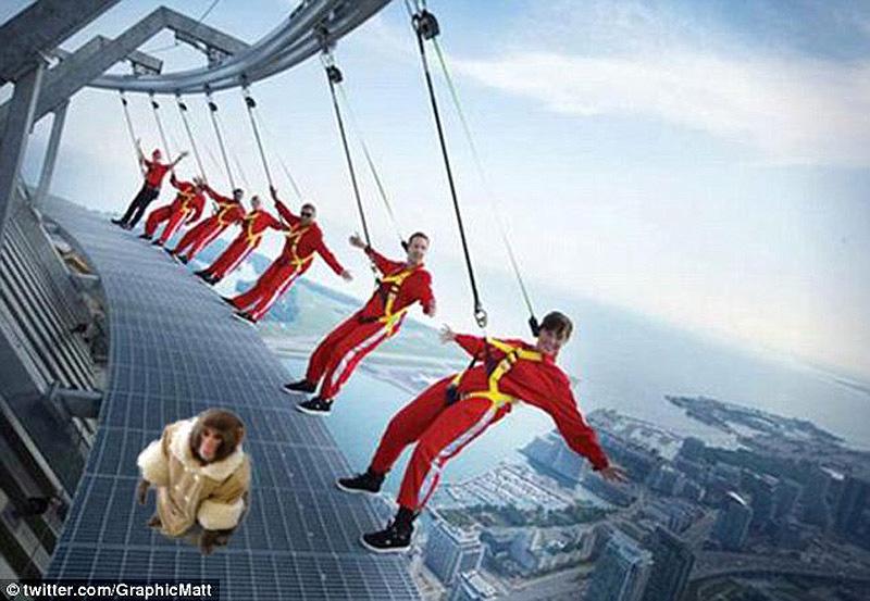 obezyankadarvin 9 История обезьянки из IKEA