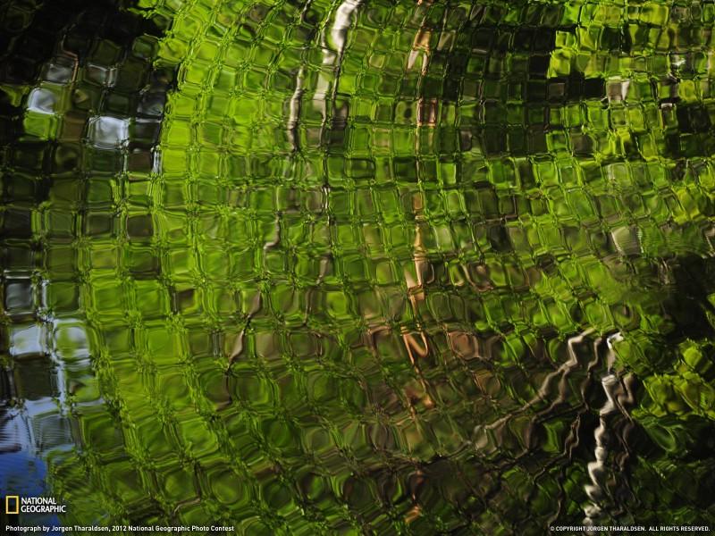 oboinationalgeographics 3 800x600 Обои для рабочего стола от National Geographic за ноябрь 2012