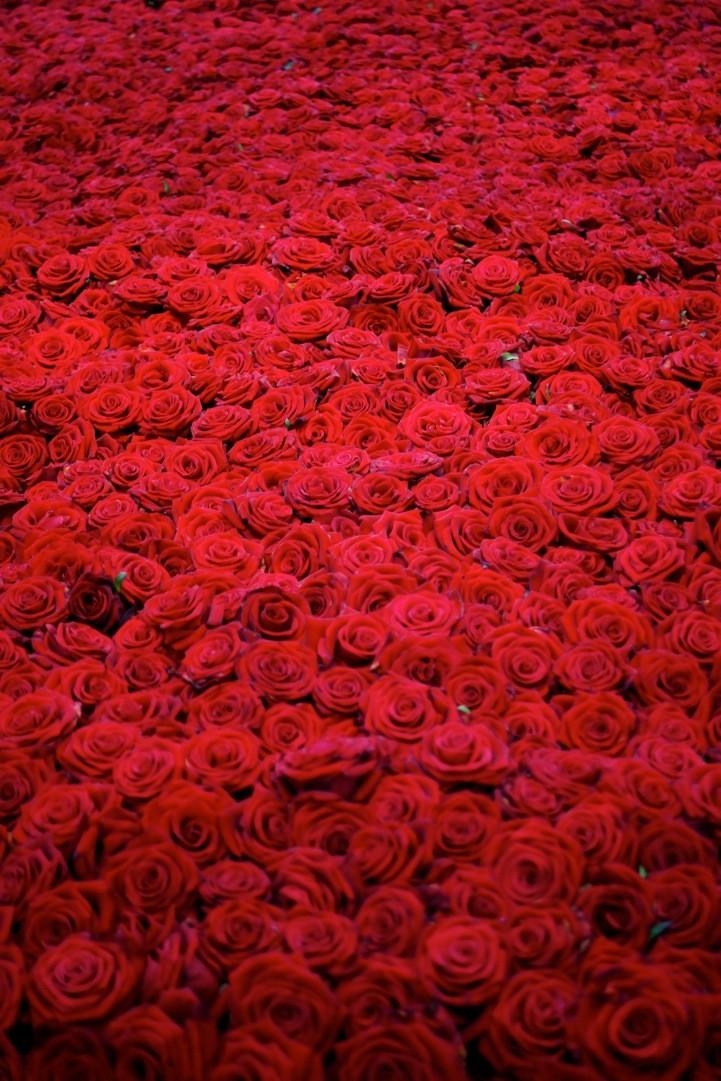 Очень много роз картинка