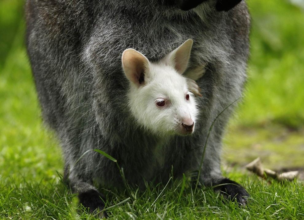 samiemiliedetyonishi 1 Самые милые детеныши животных за 2012 год