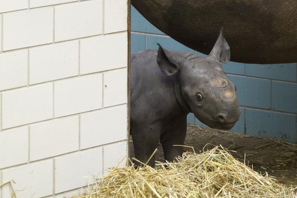 samiemiliedetyonishi 10 Самые милые детеныши животных за 2012 год