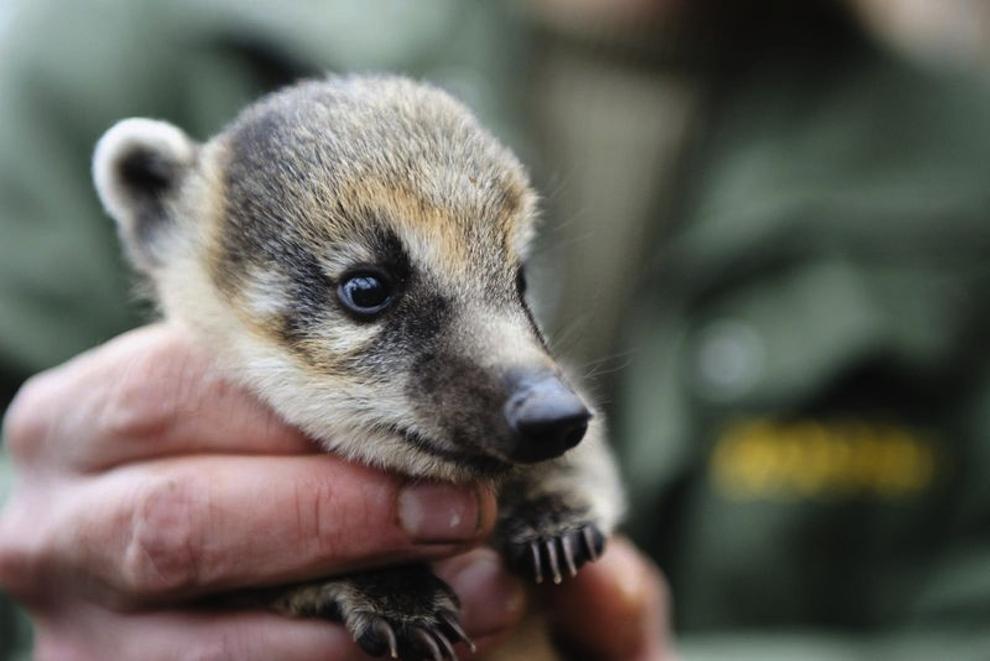 samiemiliedetyonishi 11 Самые милые детеныши животных за 2012 год