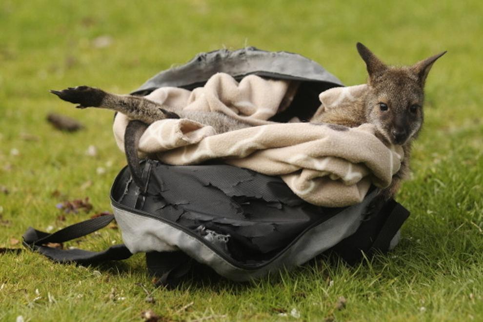 samiemiliedetyonishi 12 Самые милые детеныши животных за 2012 год
