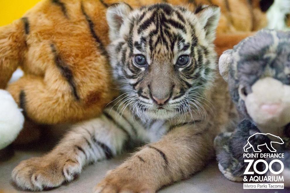 samiemiliedetyonishi 15 Самые милые детеныши животных за 2012 год