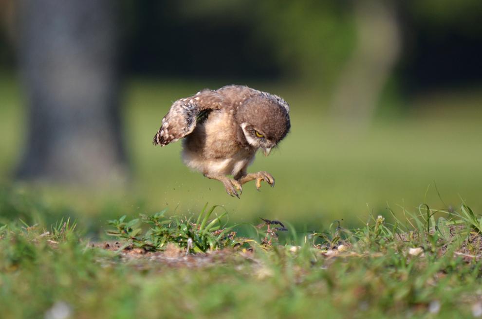 samiemiliedetyonishi 16 Самые милые детеныши животных за 2012 год