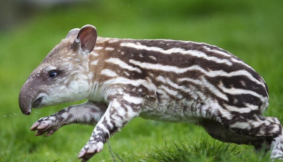 samiemiliedetyonishi 17 Самые милые детеныши животных за 2012 год