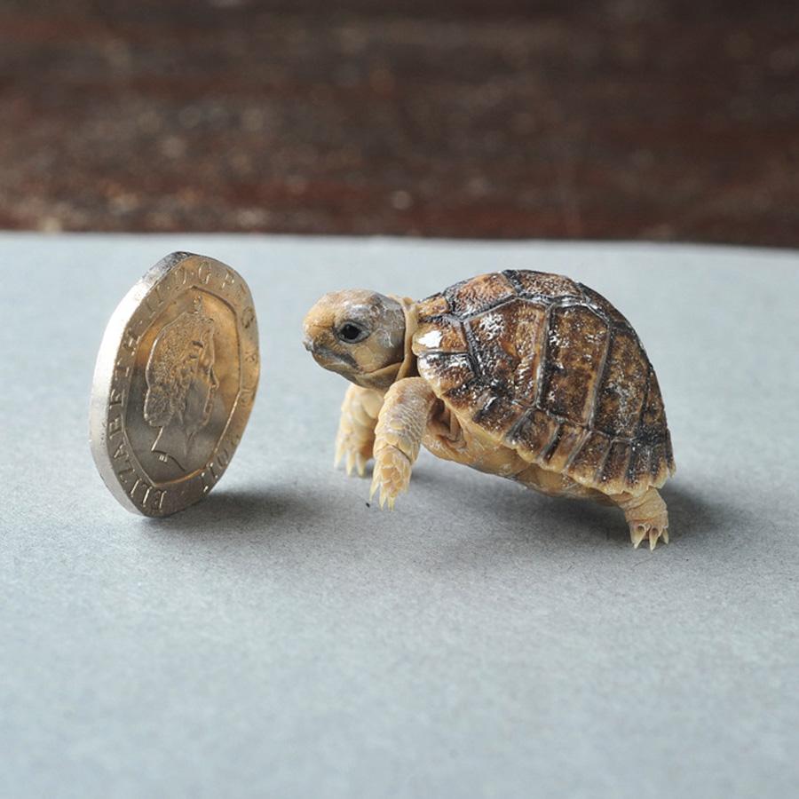 samiemiliedetyonishi 18 Самые милые детеныши животных за 2012 год