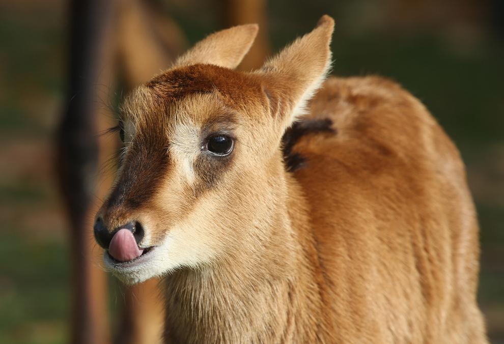 Самые милые детеныши животных за 2012