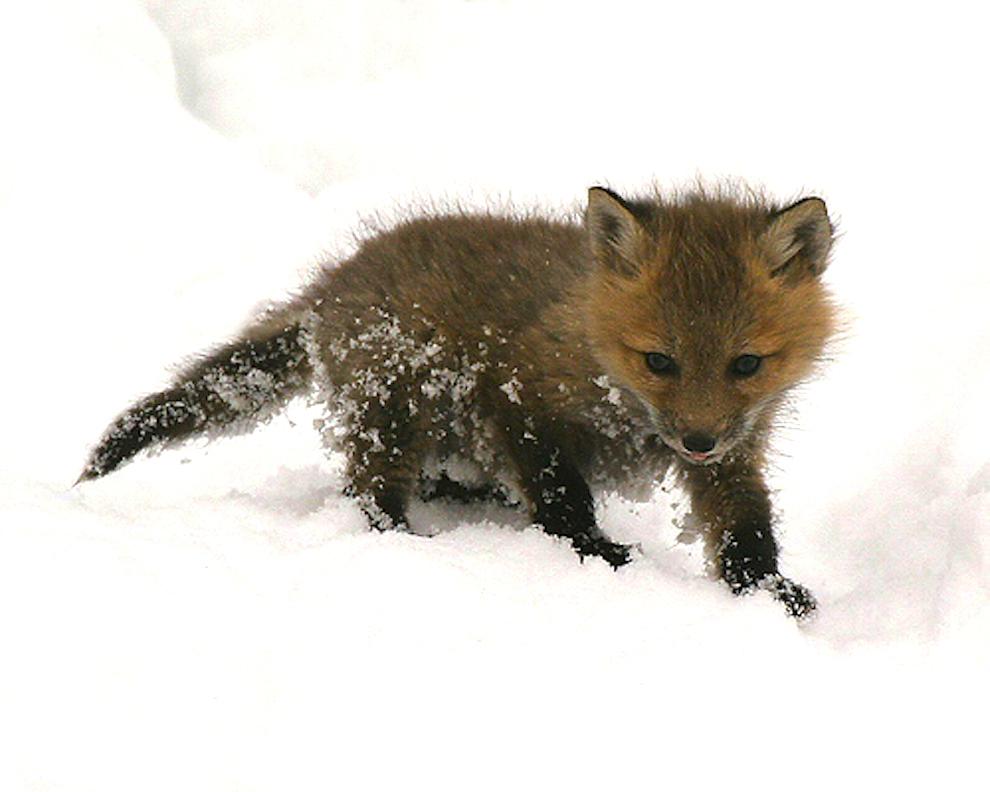samiemiliedetyonishi 20 Самые милые детеныши животных за 2012 год