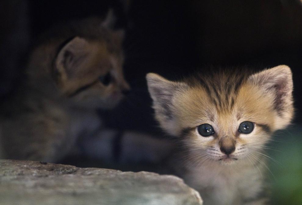 samiemiliedetyonishi 22 Самые милые детеныши животных за 2012 год