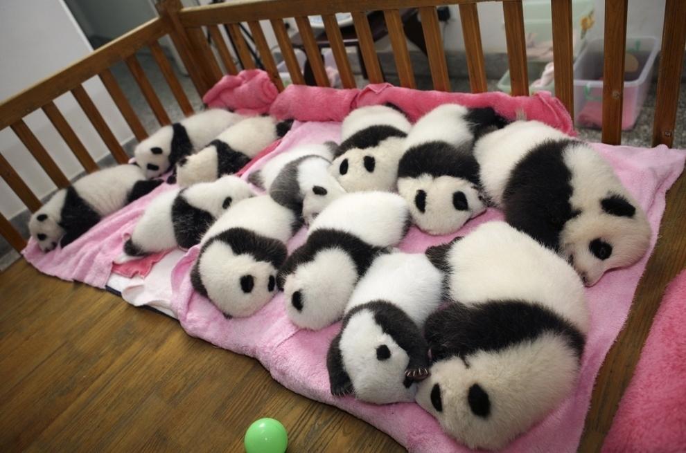 samiemiliedetyonishi 23 Самые милые детеныши животных за 2012 год