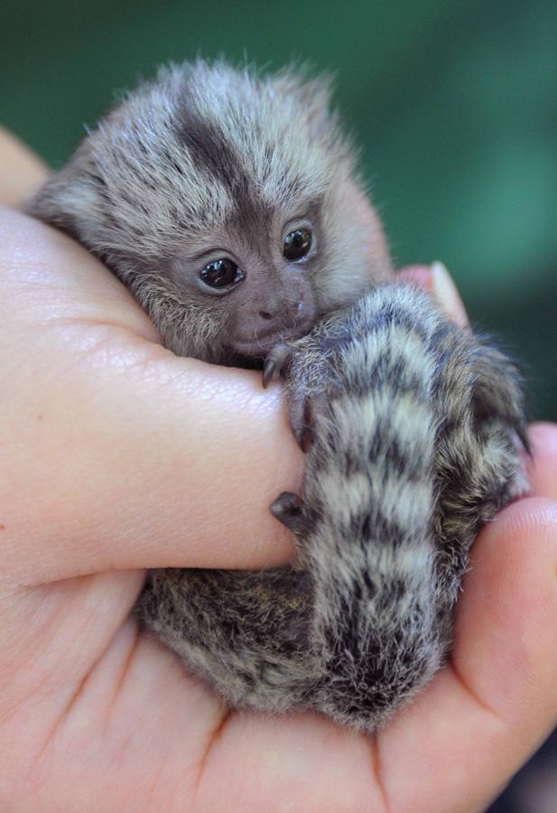 samiemiliedetyonishi 24 Самые милые детеныши животных за 2012 год