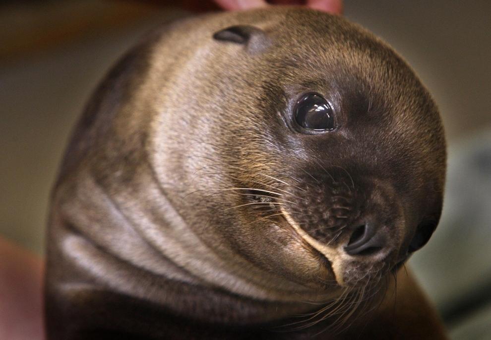 samiemiliedetyonishi 26 Самые милые детеныши животных за 2012 год