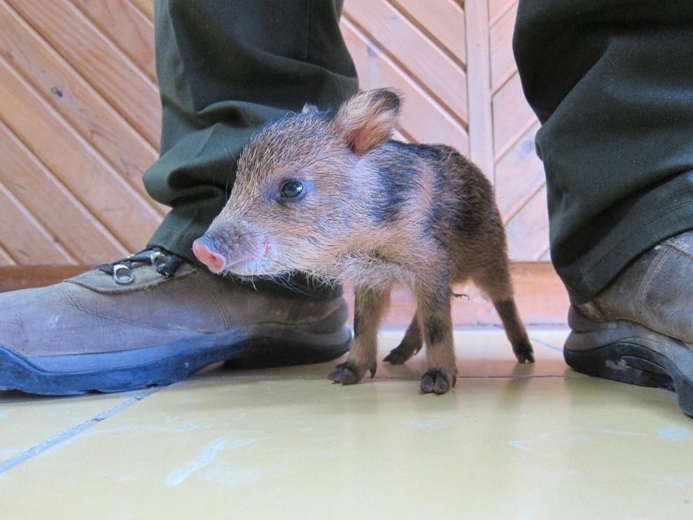 samiemiliedetyonishi 27 Самые милые детеныши животных за 2012 год