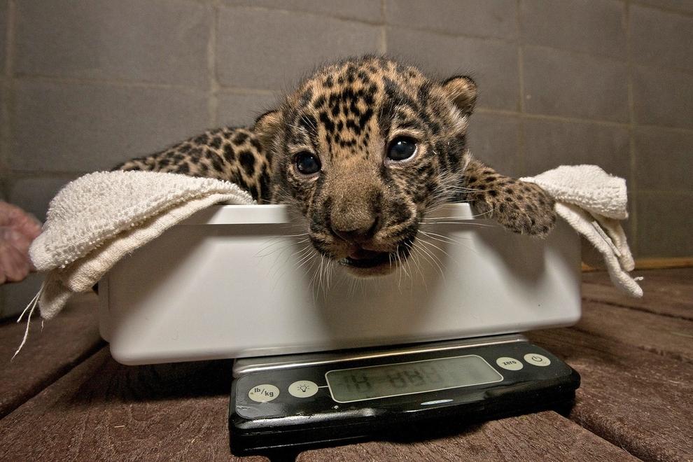 samiemiliedetyonishi 28 Самые милые детеныши животных за 2012 год