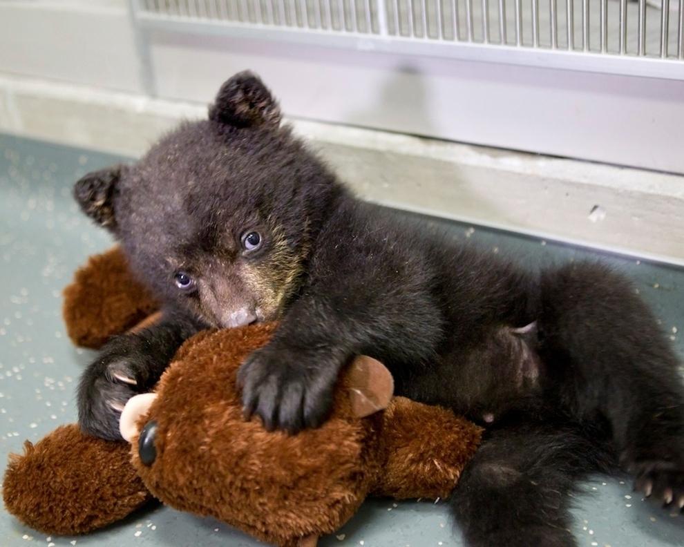 samiemiliedetyonishi 29 Самые милые детеныши животных за 2012 год