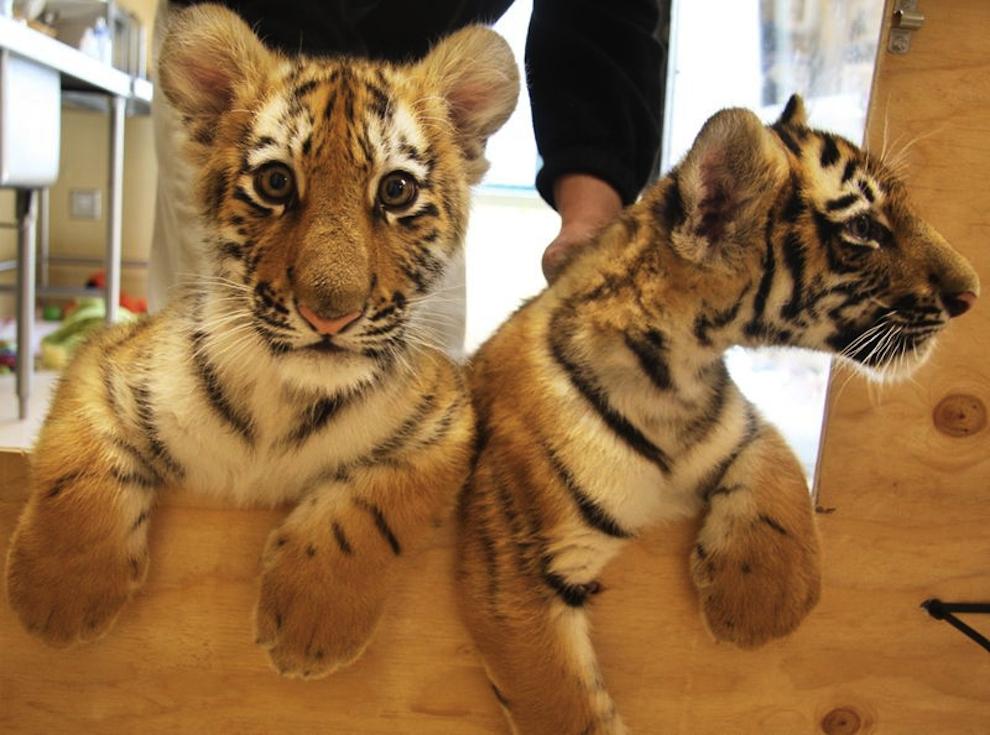 samiemiliedetyonishi 31 Самые милые детеныши животных за 2012 год