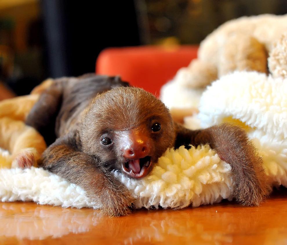 samiemiliedetyonishi 32 Самые милые детеныши животных за 2012 год