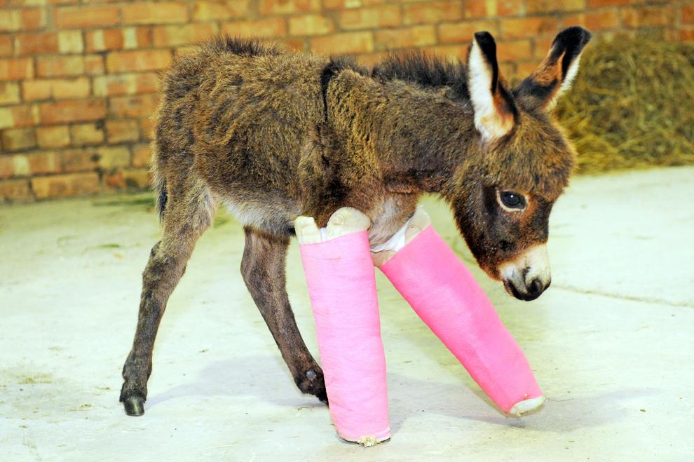 samiemiliedetyonishi 33 Самые милые детеныши животных за 2012 год