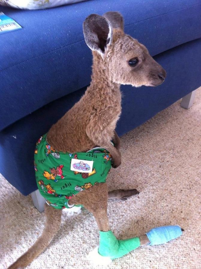 samiemiliedetyonishi 35 Самые милые детеныши животных за 2012 год