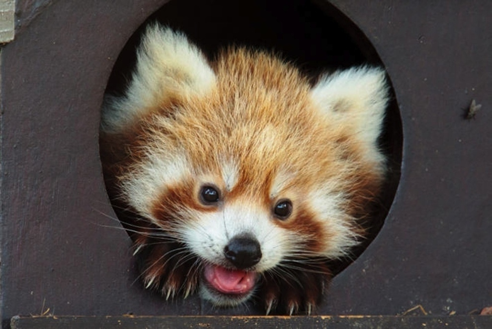samiemiliedetyonishi 37 Самые милые детеныши животных за 2012 год