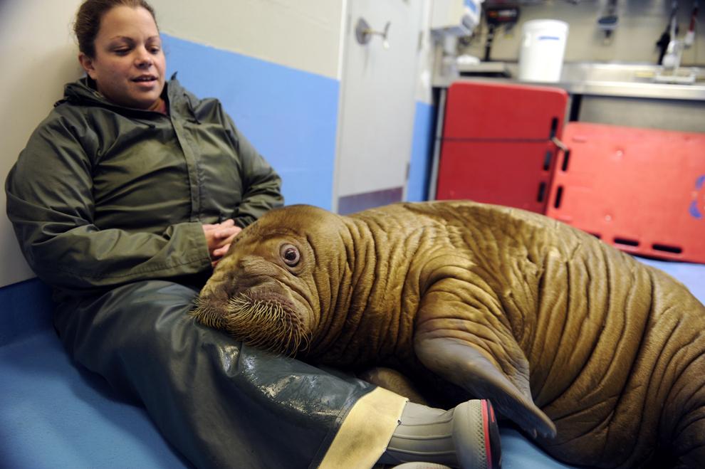 samiemiliedetyonishi 38 Самые милые детеныши животных за 2012 год