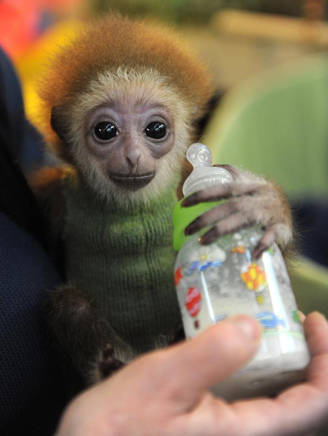 samiemiliedetyonishi 39 Самые милые детеныши животных за 2012 год
