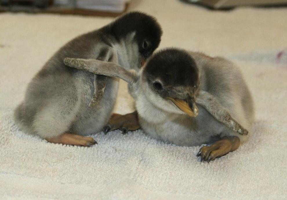 samiemiliedetyonishi 4 Самые милые детеныши животных за 2012 год