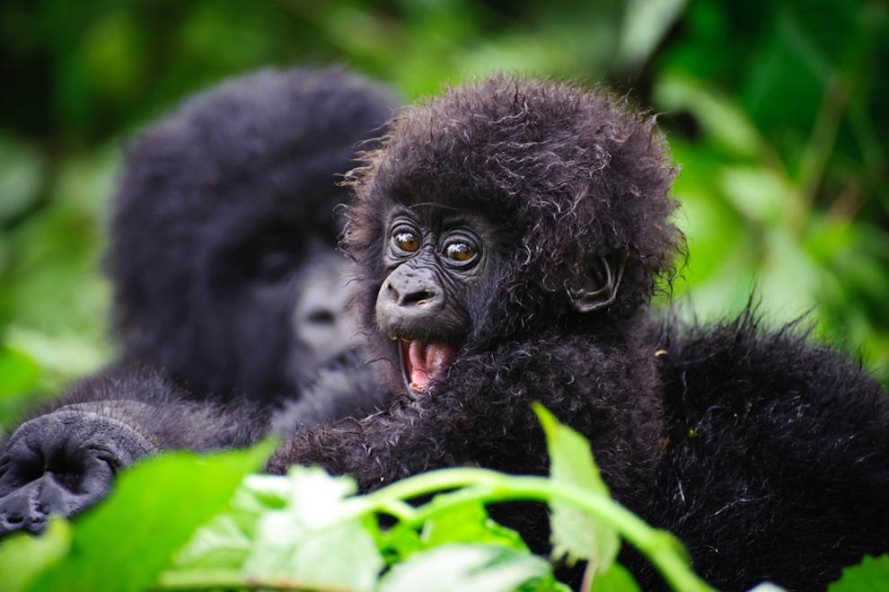 samiemiliedetyonishi 42 Самые милые детеныши животных за 2012 год